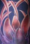 Bulbous Orchid Pods